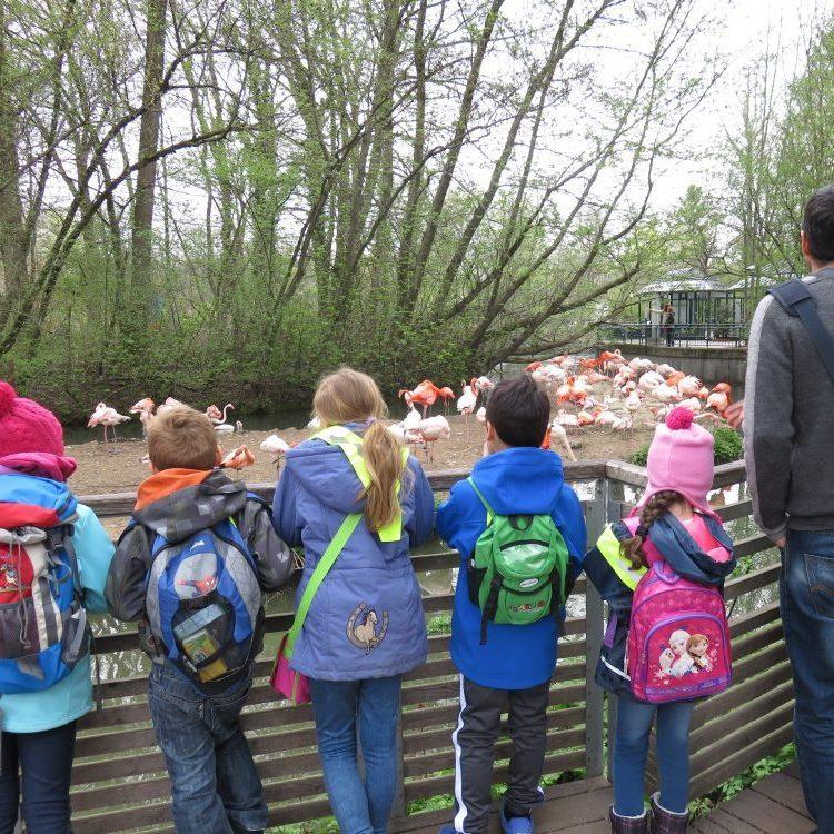 Ferienaktion - Ausflug in den Tierpark Hellabrunn